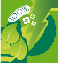 Webhosting mit 100% Ökostrom